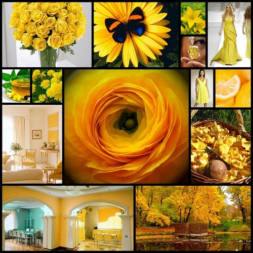 Yellow color. Yellow photo collage