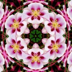 Flower Kaleidoscope. Photoart by Anatoly Vostochny