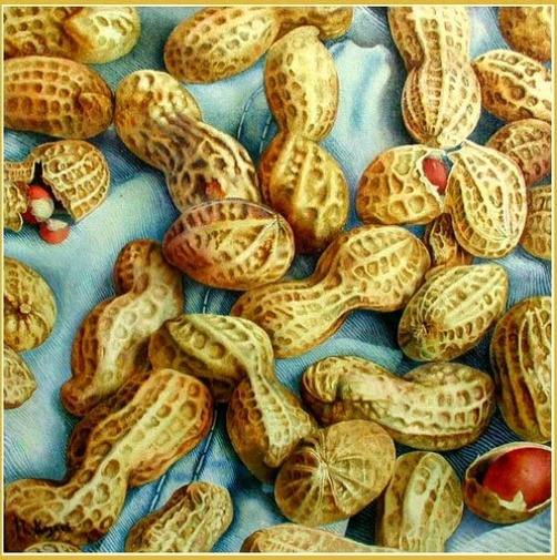 peanuts. Hyperrealistic painting by Russian artist Pyotr Kozlov