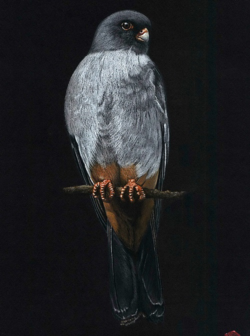 Pastel drawings by Mikhail Vedernikov. Falco vespertinus
