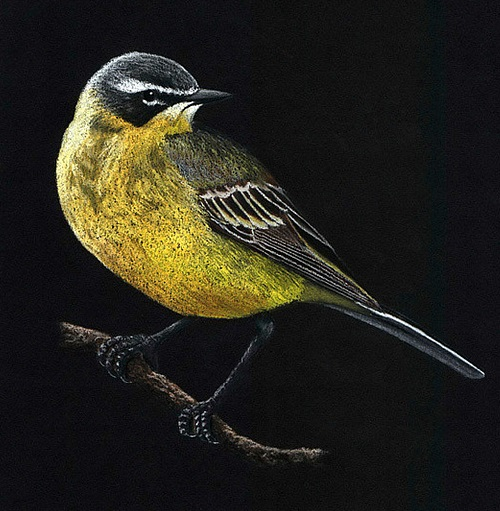 Pastel drawing by Mikhail Vedernikov (Nemon)