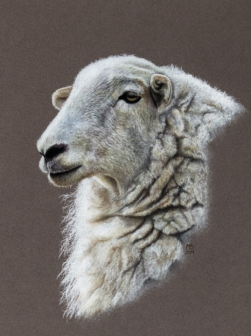 Welsh mountain sheep. Pastel drawings by Mikhail Vedernikov