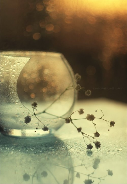 Still life photo art by Svoboda. Broken dreams