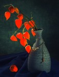 Still life photography by Irina Prikhodko
