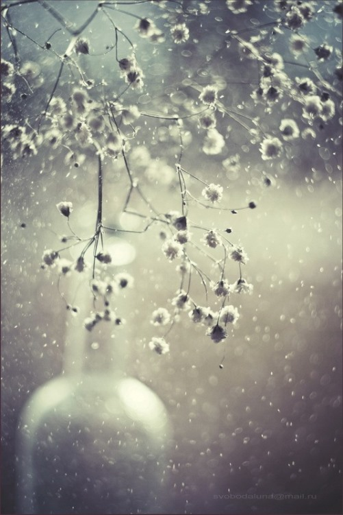 Still life photo art by Svoboda. Snowy day