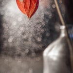 Red physalis. Photography by Elena Andreeva