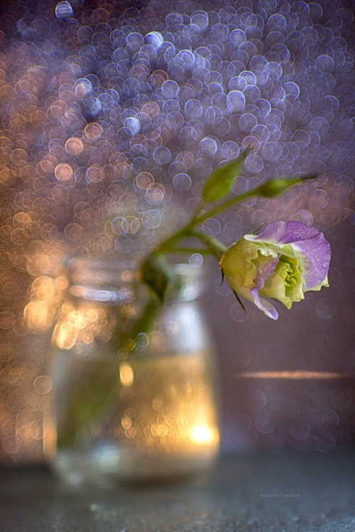 Still life photo art by Svoboda. Warm-cold morning