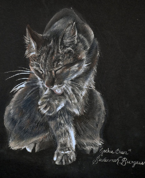 A drawing of Savannah Burgess's cat, Jackie Chan. Chalk pastels on a piece of black foam board