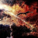 Flying in the night sky black bird. Graphic art by Salim Ljuma