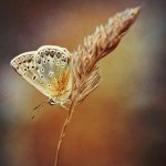 Series 'Butterflies'. Photographer P. Laura, Minsk, Belarus
