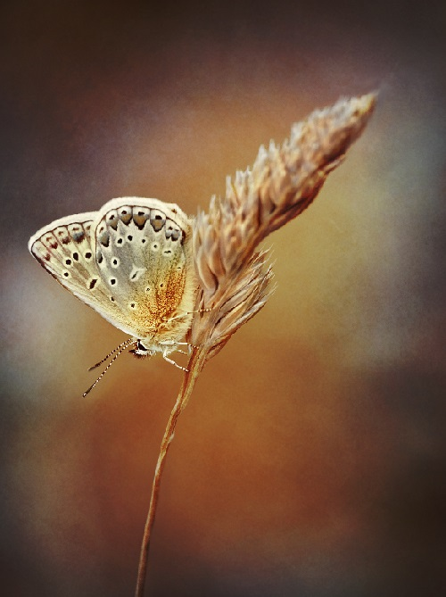 Series 'Butterflies'. Photographer P. Laura, Belarus