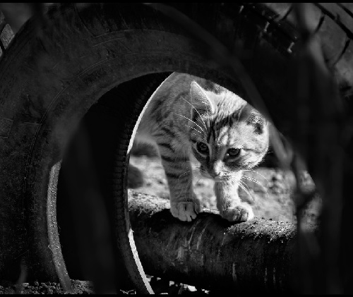 The series 'Cats'. Photographer P. Laura, Belarus
