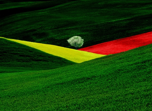 Best-known work on the natural landscape by Franco Fontana