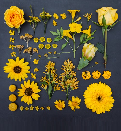 Flowers, petals and leaves. Arranged nature by Emily Blincoe