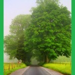 Trees. Green color inspiration