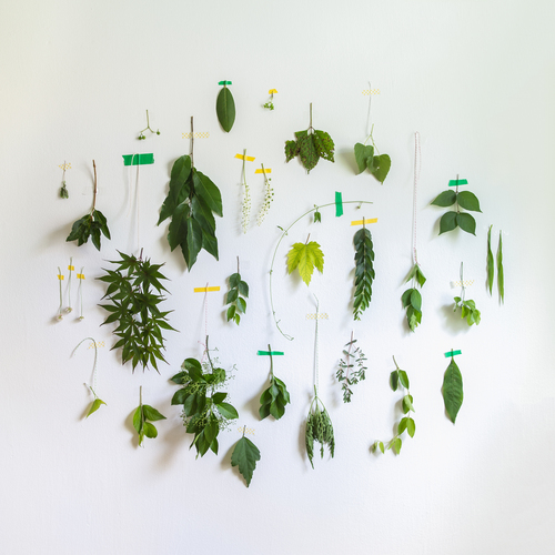 Leaves and Plants. Arranged nature by Emily Blincoe