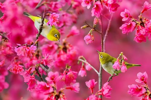 Spring melody. Sue Hsu photo art