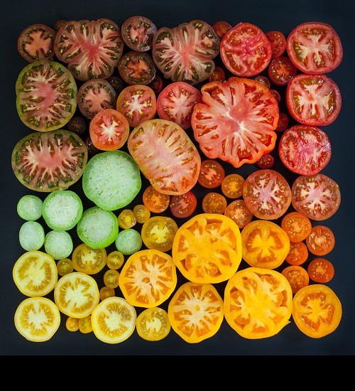 Tomato colors organized neatly