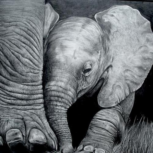 Baby elephant. Pencil artist Jerry Winick