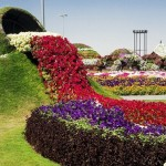 A waterfall of flowers. Dubai Miracle Topiary art