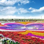 A huge stadium of flowers. Dubai Miracle Topiary art