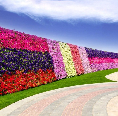 A patterned flower wall