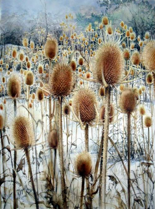Teasel. Painting by Turkish watercolorist Rukiye Garip
