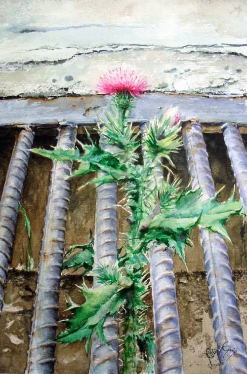 Growing through steel grating Thistle