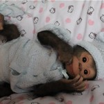 Incredibly realistic doll – Chita Bindi baby monkey doll by Ekaterina Samgina