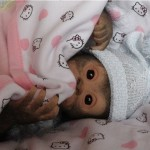 Realistic Reborn monkey Chita Bindi made by Ekaterina Samgina