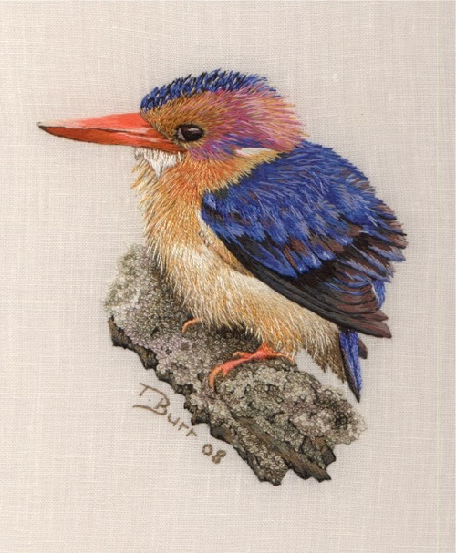 Pigmy Kingfisher. 2008