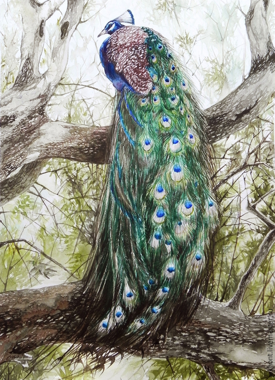 Peacock in the tree. Watercolors
