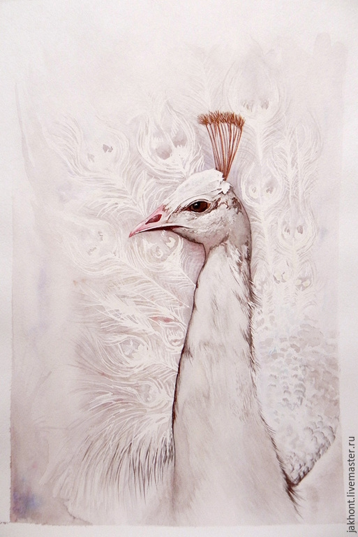 White peacock. Watercolor