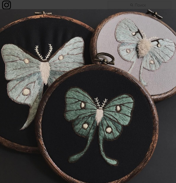 Luna moths collection