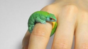 Animal Cling Ring made by Japanese self-taught artist and designer Jiro Miura