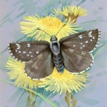 British wildlife artist Gordon Beningfield