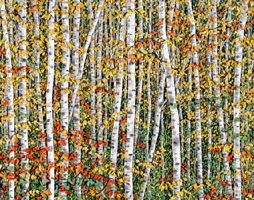 Hand Embroidery By Martha Fieber Art Kaleidoscope