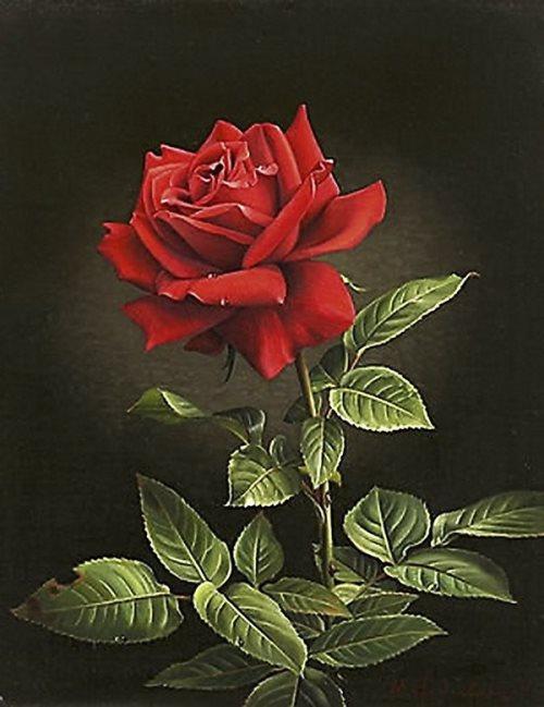 Image result for rose still life