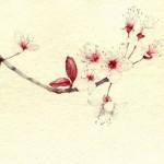 Delicate Watercolors by Silvia Molinari