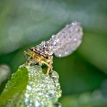 Insects in dewdrops by David Chambon