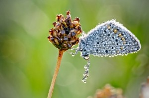 A dragonfly. Insects in dewdrops by French amateur photographer David Chambon
