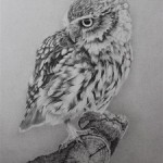 Realistic pencil drawing by Clive Meredith