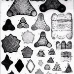 microscopic slides of arranged diatoms