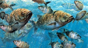 Fisherman painter Mark Susinno