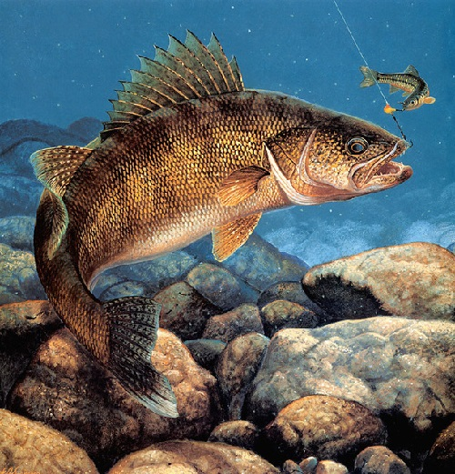 Underwater Game Fish Art & Fly Fishing Scenes. Painting by ...