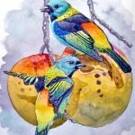 Brazilian watercolorist Chico Martins