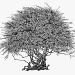 Illustrator Suthipa Kamyam
