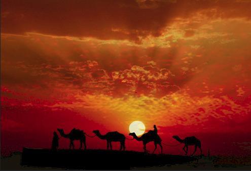 Life, night and desert