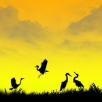 Silhouette photography by Naveed Mughal