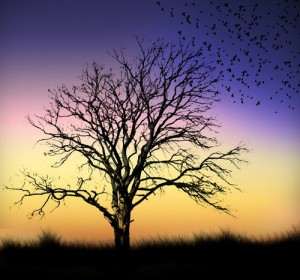 Sorrowful evening. Silhouette photography by Self-taught Pakistani photographer Naveed Mughal